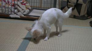 sakura_dancing3.jpg