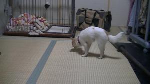 sakura_dancing5.jpg