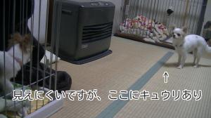 sakura_dancing9.jpg