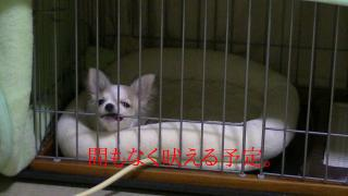 sakura_gaw2.jpg