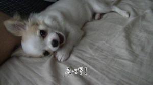 sakura_goki2.jpg