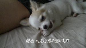 sakura_goki4.jpg