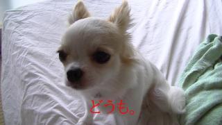 sakura_gow.jpg
