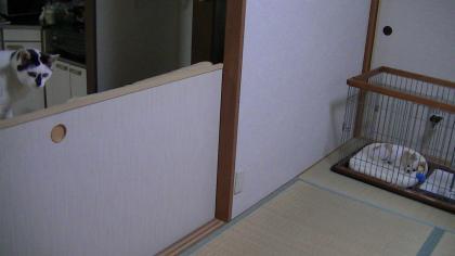 sakura_kimo3.jpg