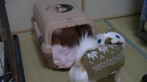 sakura_newbag.jpg