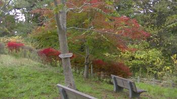 sakura_park.jpg