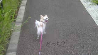sakura_reader.jpg