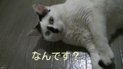 sakura_riku.jpg
