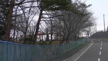 sakura_sakurasaku2.jpg
