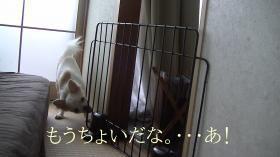 sakura_smart12.jpg