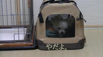 sakura_smart16.jpg