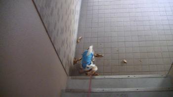 sakura_stairs3.jpg