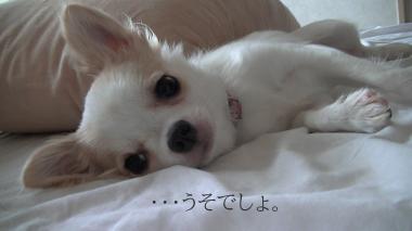 sakura_uso.jpg