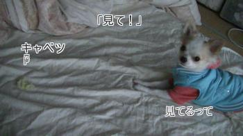 sakura_wait2.jpg