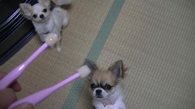 sakurahayate_Toothbrushing.jpg