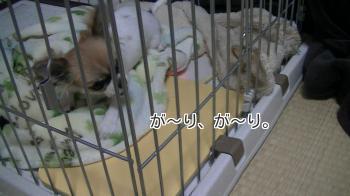 sakurahayate_Toothbrushing2.jpg
