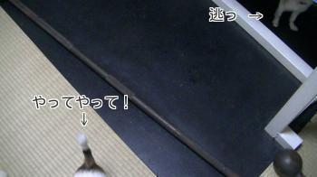 sakurahayate_Toothbrushing3.jpg