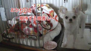 sakurahayate_appeal3.jpg