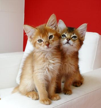 マーサスミスの仔猫たち