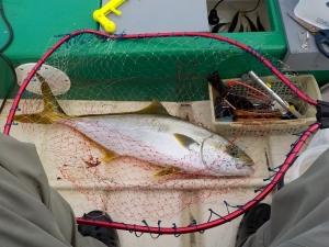 館山 釣り 010ヒラマサの様なワラサ