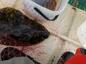 釣り 館山 007-10時すぎアオモノ仕掛けにヒラメかかる