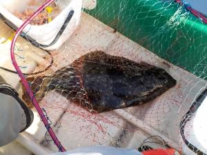 館山 釣り 005-8時ころヒラメゲット