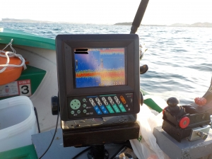 DSCN0125-水温17度台 群れなし