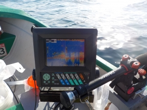 DSCN0130 - 60m付近の漁礁