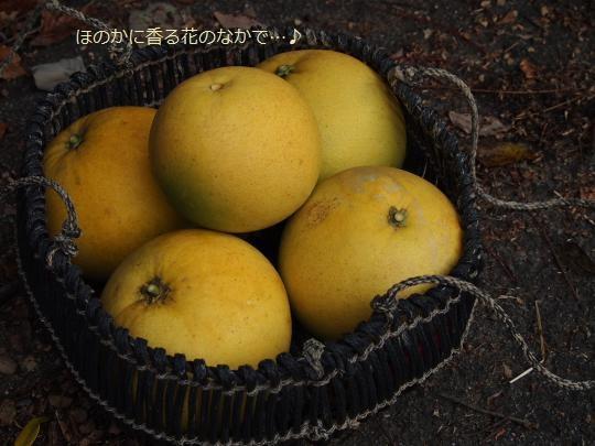 PC174239_convert_20121228192240.jpg