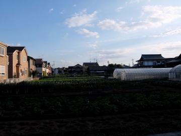 野口製麺所店4