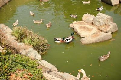 zoo rinn 013