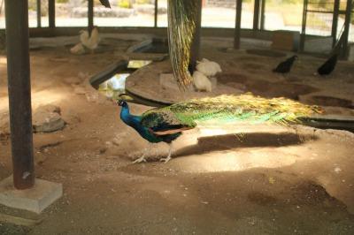 zoo rinn 027