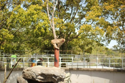 zoo rinn 031