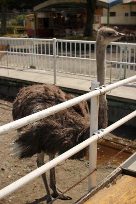 zoo rinn 082
