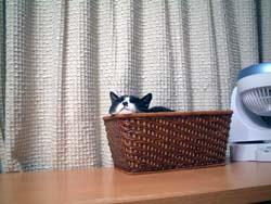 suzu201206a.jpg