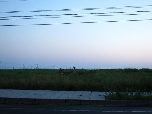 ノシャップ岬 1