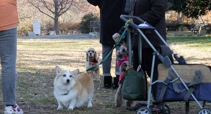 2013朝のお散歩