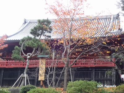 2014_1129_070300-DSC04311上野公園②