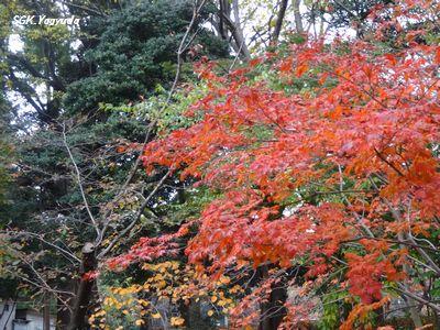 2014_1129_104511-DSC04318上野公園③
