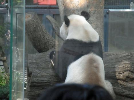RIMG2492b_panda.jpg