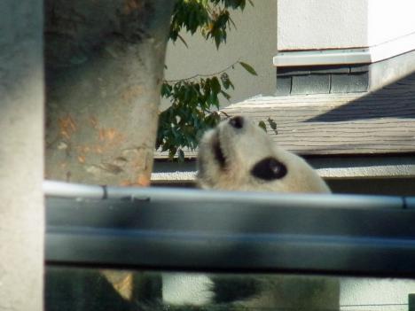RIMG2494b_panda.jpg