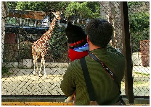 池田動物園 (5)