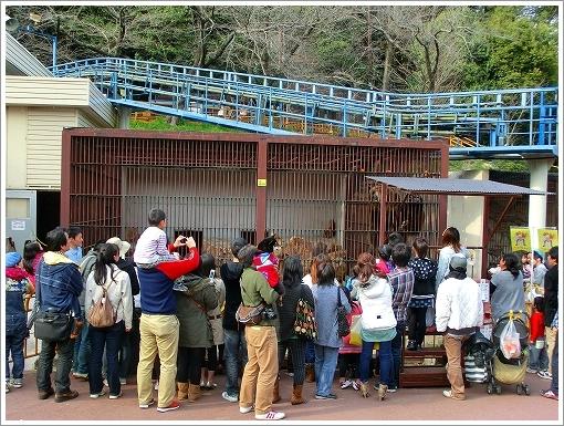 池田動物園 (3)