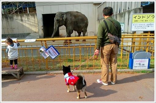 池田動物園 (4)
