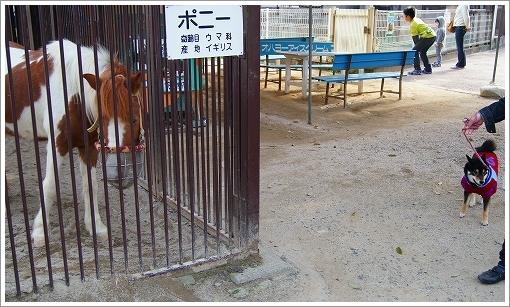 池田動物園 (6)