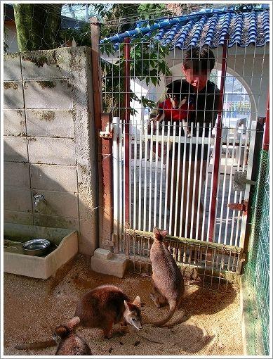 池田動物園 (8)