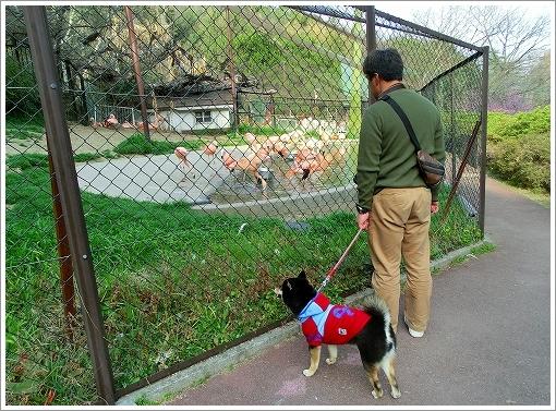 池田動物園 (12)