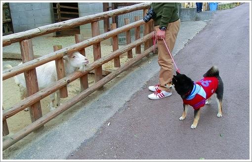 池田動物園 (14)