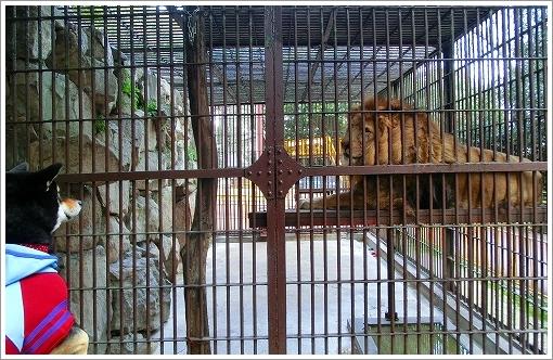 池田動物園 (23)