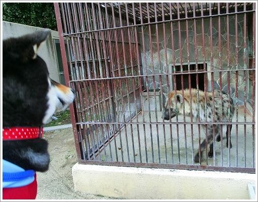 池田動物園 (24)